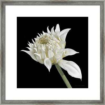 Ivory Dahlia Flower In The Beginning Framed Print by Jennie Marie Schell