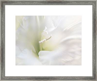Ivory Gladiola Flower Framed Print by Jennie Marie Schell
