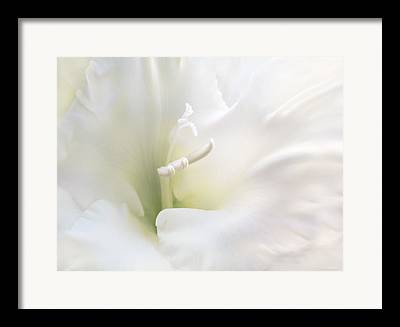 Gladiolas Framed Prints