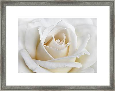 Ivory Rose Flower Framed Print by Jennie Marie Schell