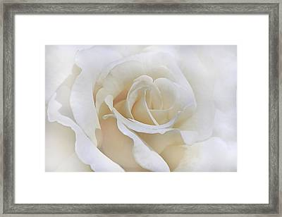 Ivory Rose In The Clouds Framed Print