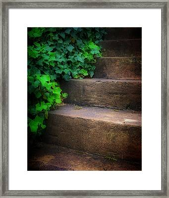 Ivy Beside Steps Framed Print