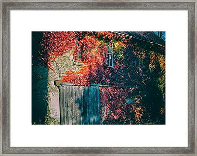 Ivy Covered Barn Framed Print