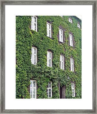 ivy Framed Print by Dan Radi
