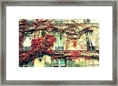 Ivy Growing On A Wall   Framed Print