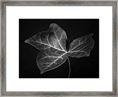 Black And White Flowers Macro Photography Art Work Framed Print by Artecco Fine Art Photography
