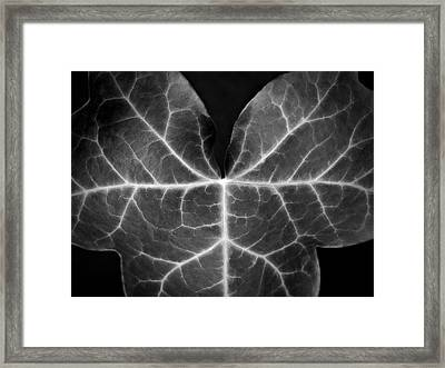 Black And White Flowers Macro Photography Art Work Framed Print