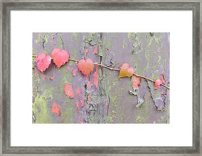 Ivy Vs Paint Framed Print