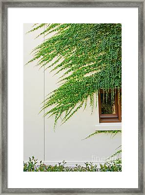 Ivy - Window Covered By Creeping Ivy. Framed Print