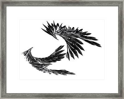 J Big   Crows Framed Print