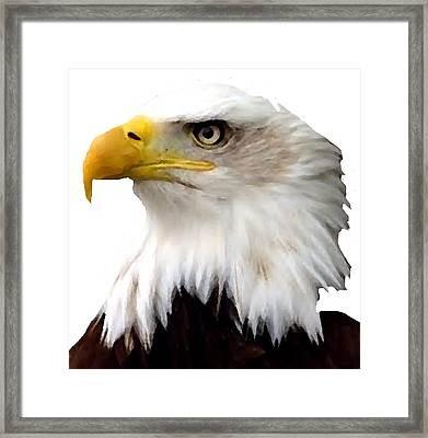 J6400 Broken Winged Bird Collection Framed Print