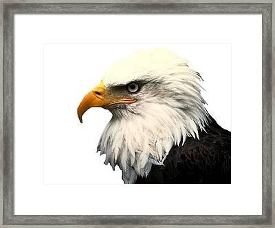 J6404 Broken Winged Bird Collection Framed Print