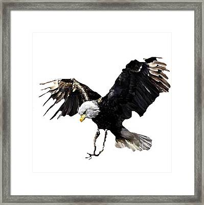 J6939 Broken Winged Bird Collection Framed Print by Jill Walton