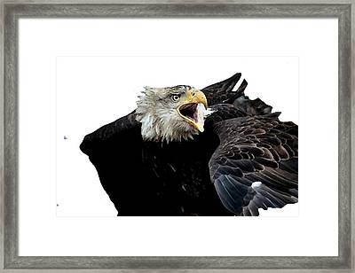 j6940 Broken Winged Bird Collection Framed Print by Jill Walton