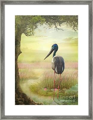 Jabiru Dreaming Framed Print by Trudi Simmonds