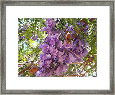 Jacaranda Blossoms 2 Framed Print by Nancy Kane Chapman