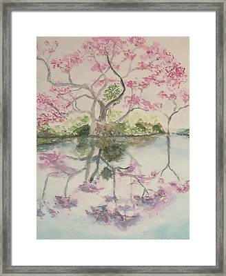 Jacaranda Evening Framed Print by Katie Spicuzza