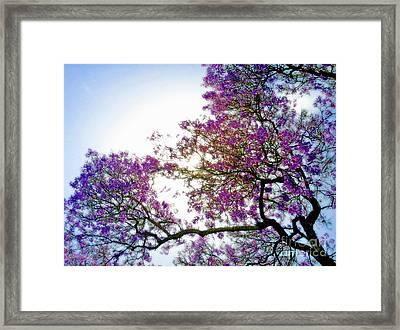 Jacaranda Glory Framed Print by Gwyn Newcombe