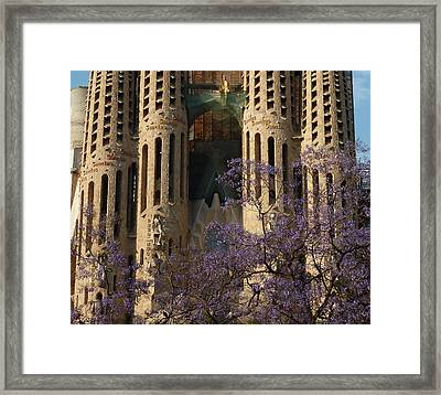 Jacaranda In Barcelona Framed Print by Christine Burdine