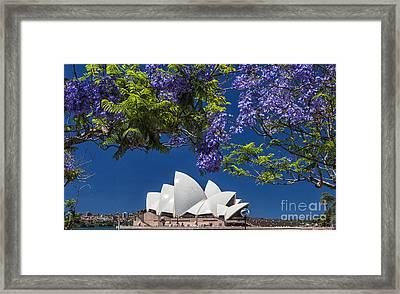 Jacaranda Spring Framed Print by Avalon Fine Art Photography