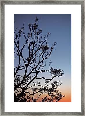 Jacaranda Sunset Framed Print by Rona Black