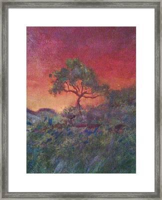 Jacaranda Tree Framed Print by Joy Gilley