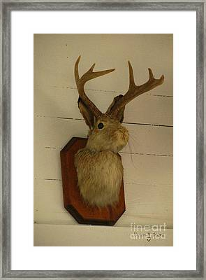 Jack-a-lope Framed Print by Donna Brown