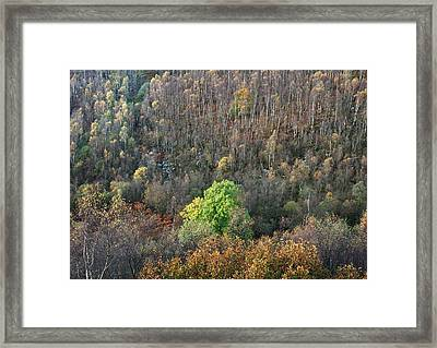Jack Flat Chatsworth Estate Framed Print by Jerry Daniel