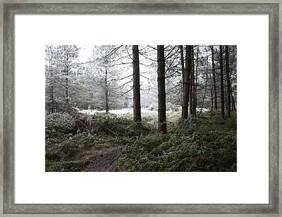 Jack Frost Bites Back Framed Print