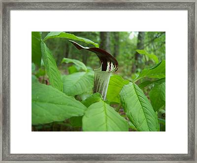 Framed Print featuring the photograph Jack In The Pulpit by William Tanneberger