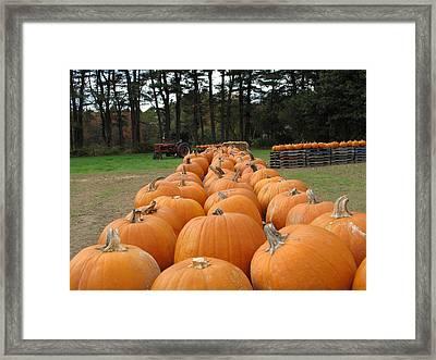 Jack O Lanterns In Waiting Framed Print