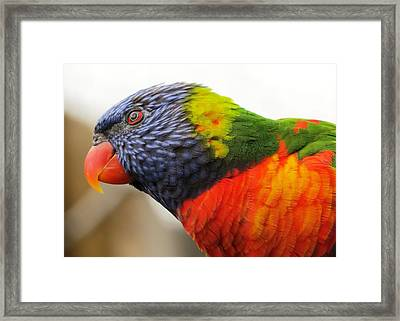 Jack Of All Colors Framed Print