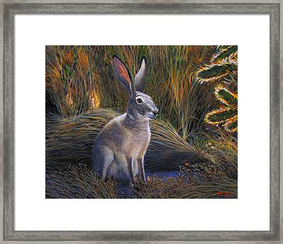 Jack Rabbit In The Brush Framed Print by Charles Wallis