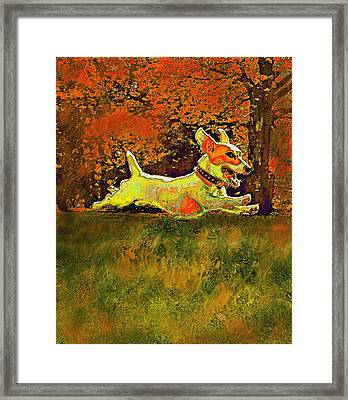 Jack Russell In Autumn Framed Print