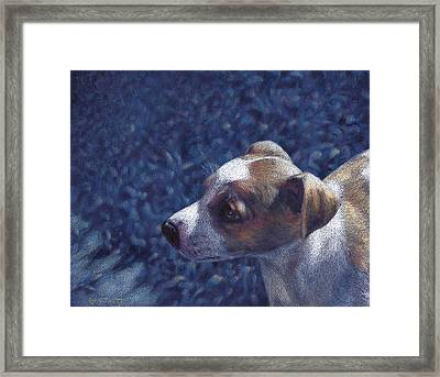 Framed Print featuring the drawing Jack Russell Terrier On Blue by Ben Hartnett