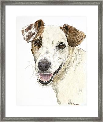Jack Russell Terrier Portrait Framed Print by Kate Sumners