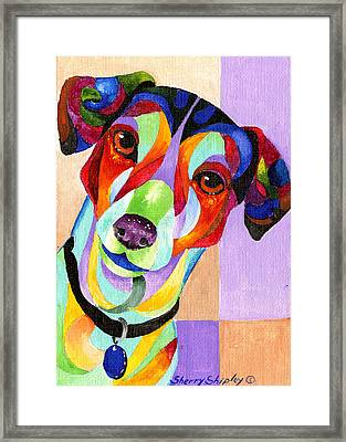 Jack Russell Terrier Framed Print by Sherry Shipley