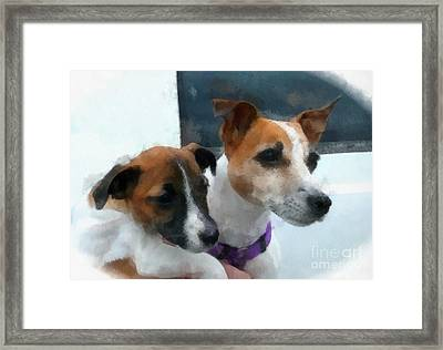 Jack Russells Framed Print by Betsy Cotton
