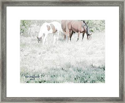 Jack Smokey And Camelot Texas Spring C Framed Print