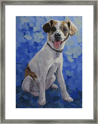Jackaroo - A Pet Portrait Framed Print by Karen Ilari