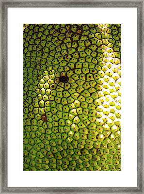 Jacked Up Fruit Framed Print by Chuck  Hicks
