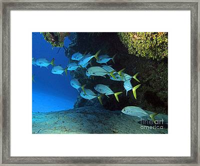 Jacks Framed Print by Carey Chen