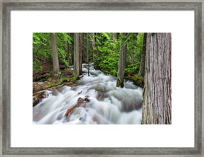 Jackson Creek In Glacier National Park Framed Print by Chuck Haney