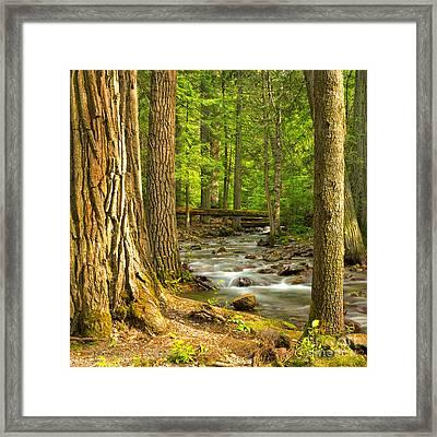 Jackson Creek Framed Print