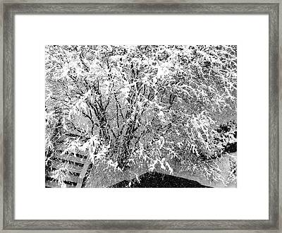 Jackson Pollock's Blizzard Framed Print