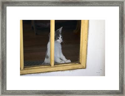 Jackson The Inquisitive Kitty Framed Print by Thomas Woolworth