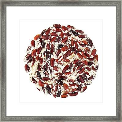 Jacob's Cattle Beans Framed Print