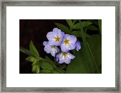Framed Print featuring the photograph Jacobs Ladder by Alan Vance Ley
