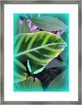 Jade Butterfly With Vignette Framed Print by Carla Parris