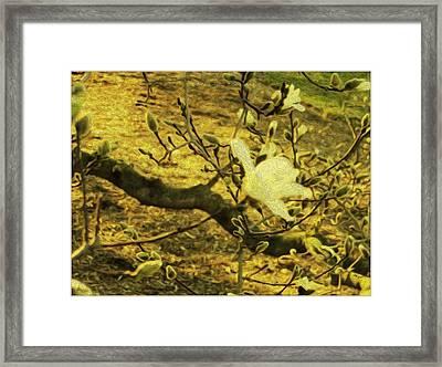 Jade Orchid Framed Print by Sonali Gangane